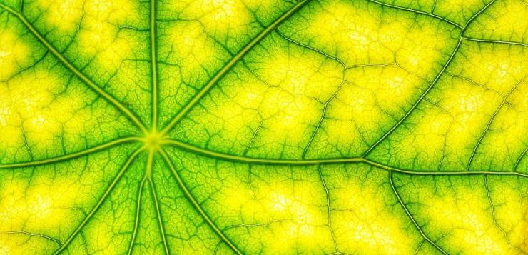 La photosynthèse artificielle